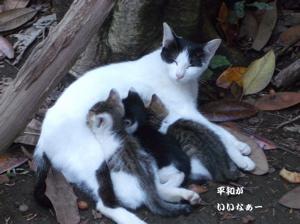 タマの家族-1 おっぱい美味しい!!