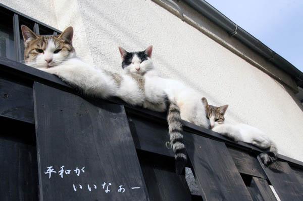 塀の上で「平和がいいなぁー」