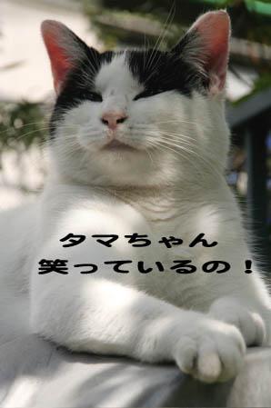 猫ちゃんも笑うよ!