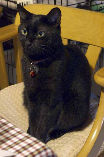 黒猫ろくは2歳になりました!