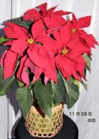 命日の花・05年11月